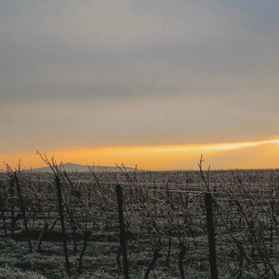 Rheinhessen im Winter