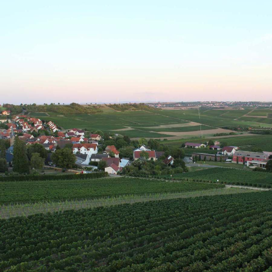 Sonnenuntergang in Rheinhessen - Vendersheim
